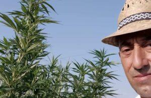 la cannabis un giorno potrà migliorare il pianeta